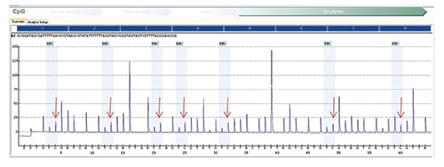 Fig. 5: MLH1 methylation assay on normal (control) tissue shows a similar increase in the percentage of cytosine nucleotides in sequence consistent with the presence of methylated nucleotides on normal tissue.