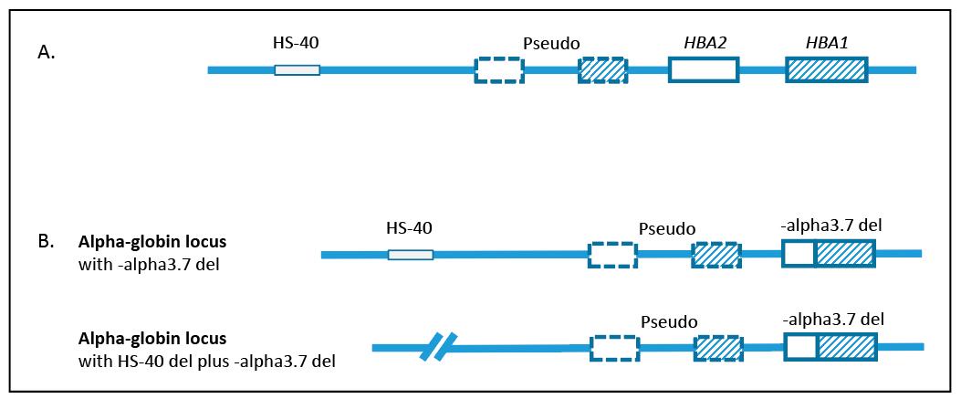 Fig1-AMP