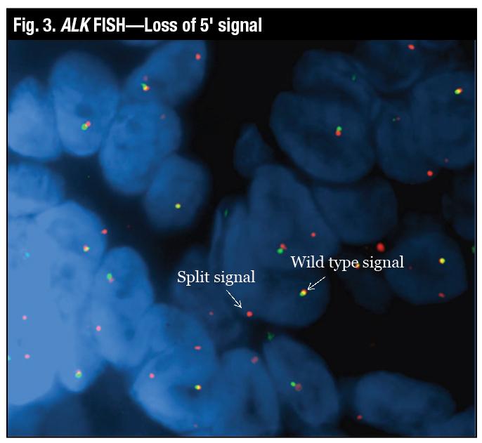 Fig3_molecular